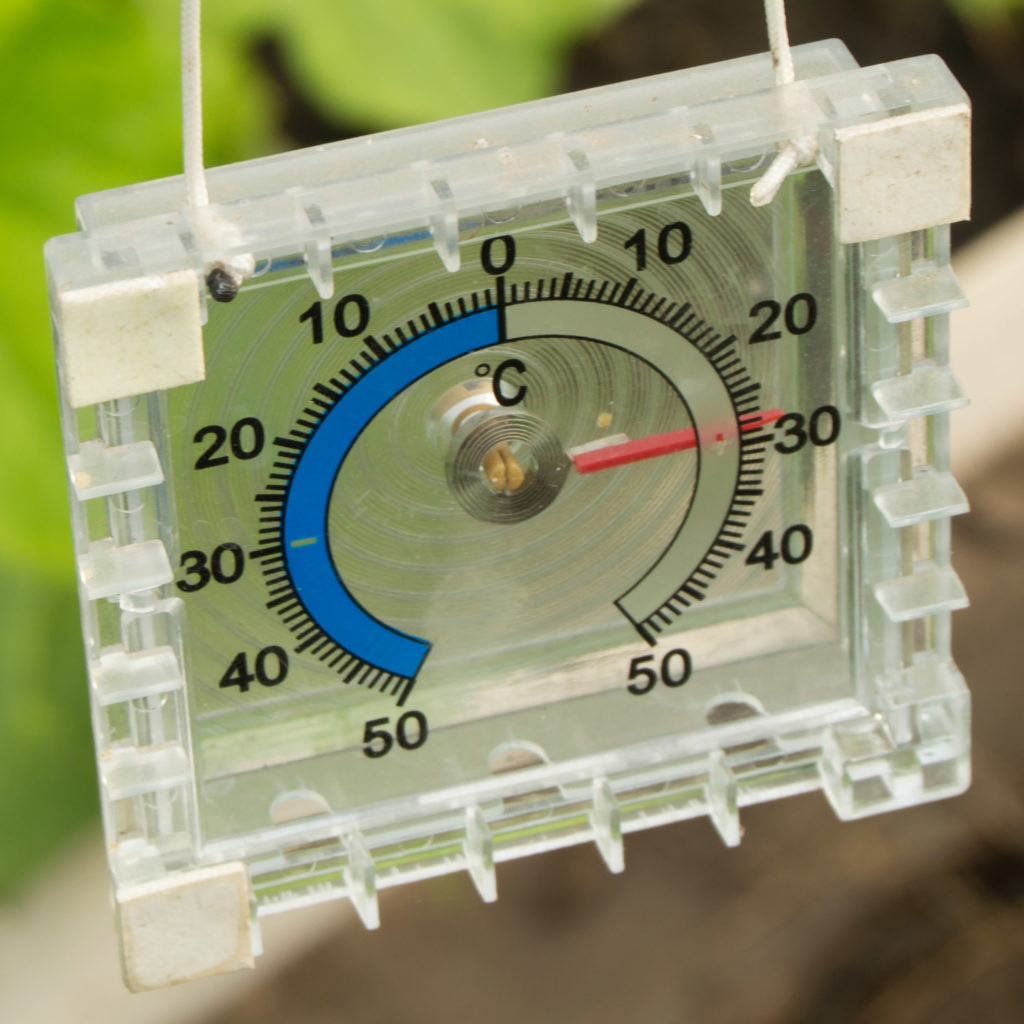 Best Temperature for Cannabis Plants - WeedSeedShop