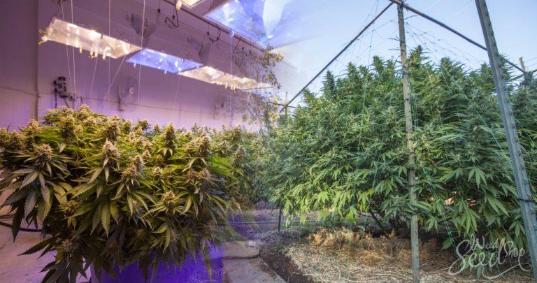 Outdoor vs. indoor growing equipment: Do you need different tools?