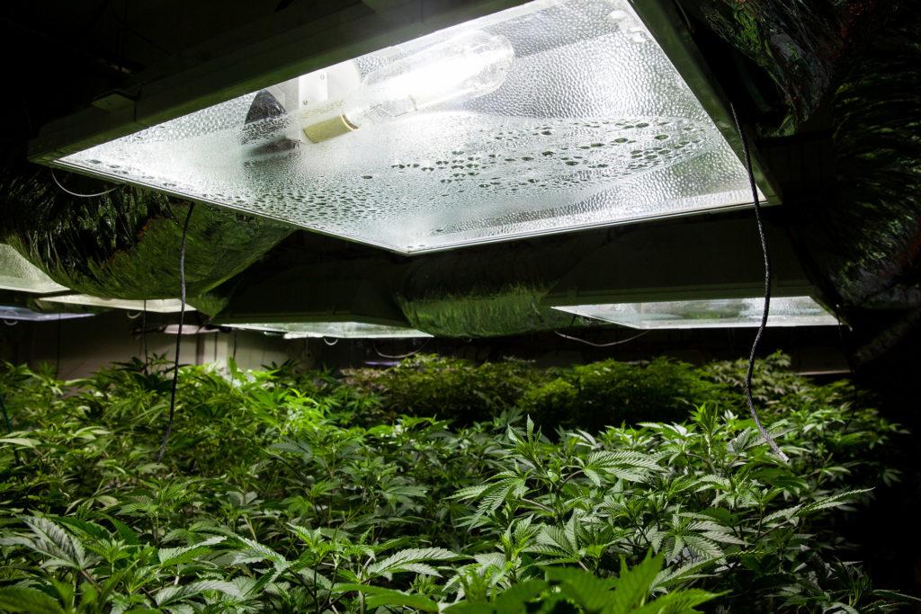 Outdoor vs. Indoor: Anbau Equipment - WeedSeedShop
