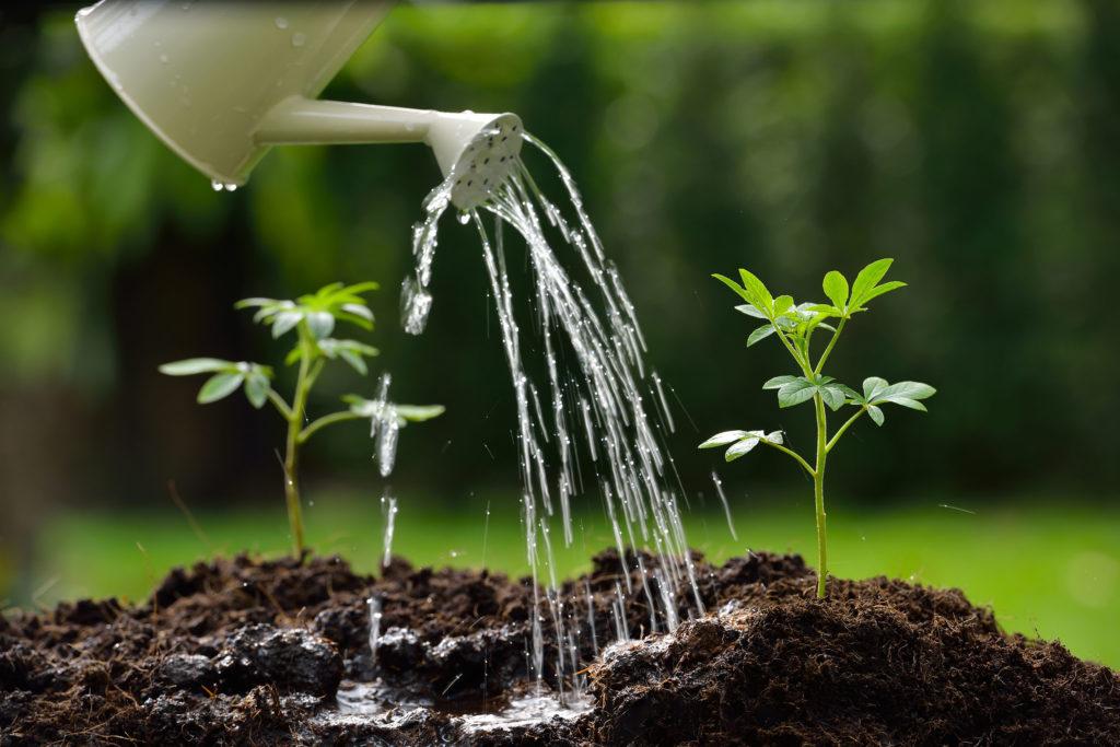 Outdoor vs. Indoor Growing Equipment - WeedSeedShop