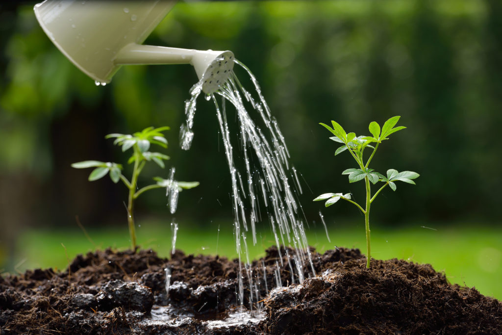 Buiten vs. binnen kweekmateriaal - WeedSeedShop