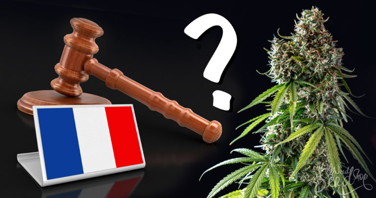 Is Cannabis Legal in France?