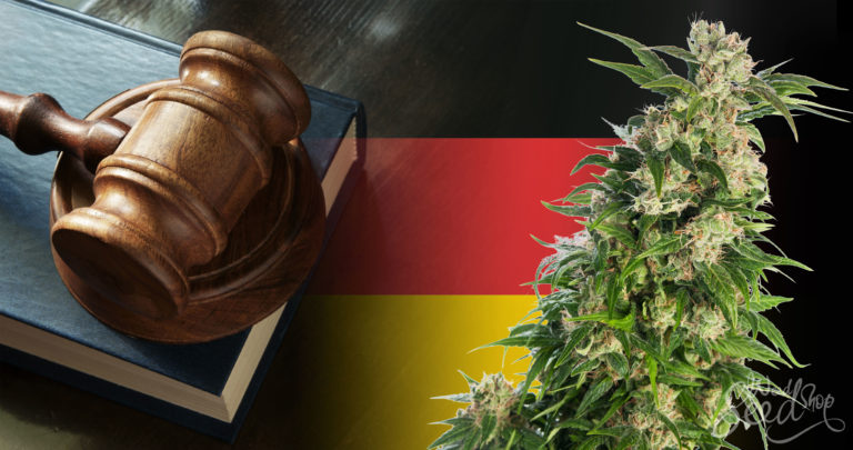Weed in Germany: The Latest Laws You Need to Know