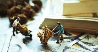 Eine Cannabis Karriere? Dieses Sind Die 8 Besten Jobs In Der Weed-Industrie
