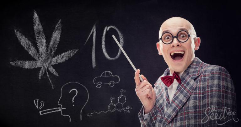 Los 10 mitos más persistentes del cannabis