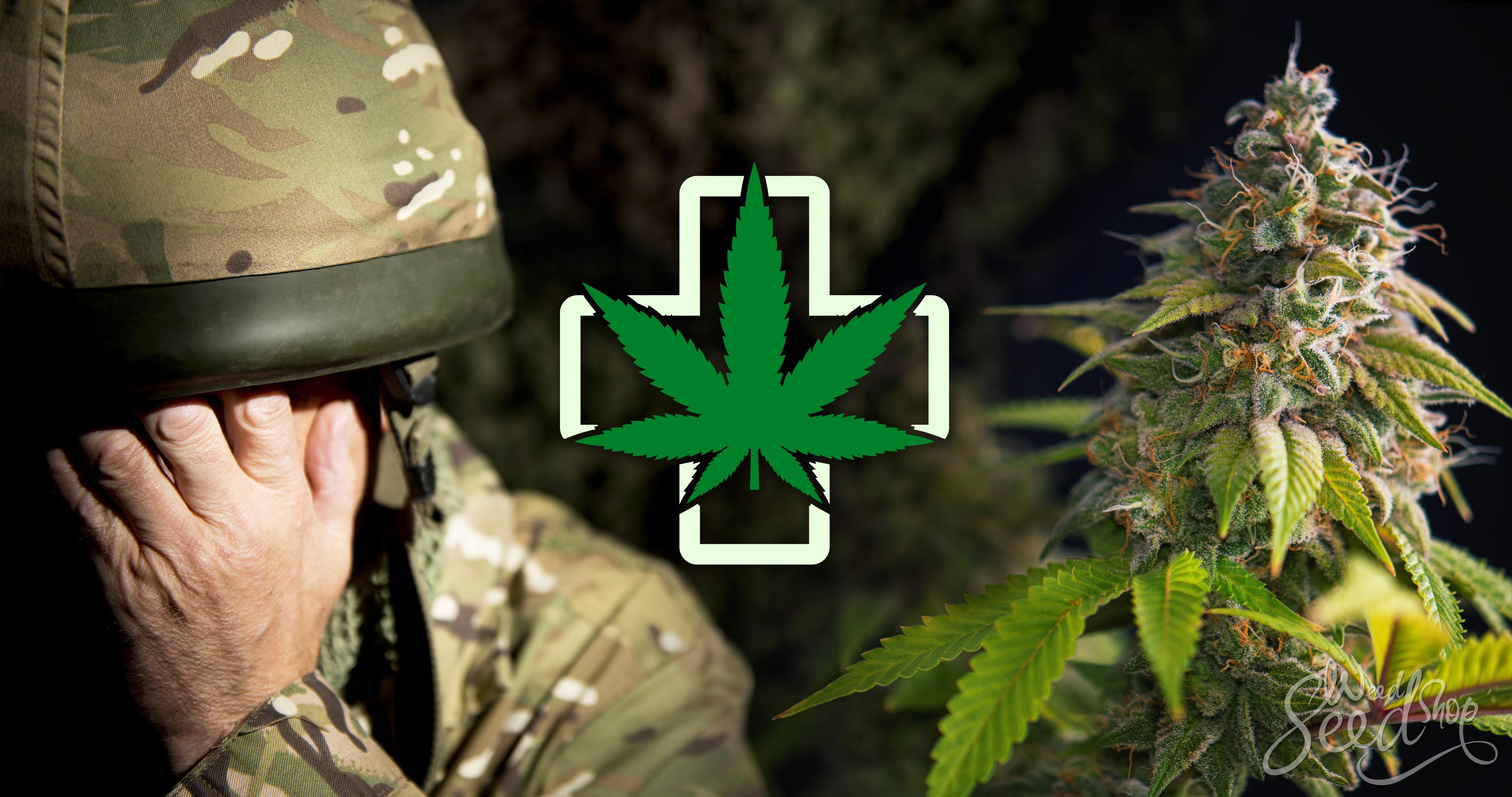 Cannabis et TSPT : dépendance ou traitement ? - WeedSeedShop