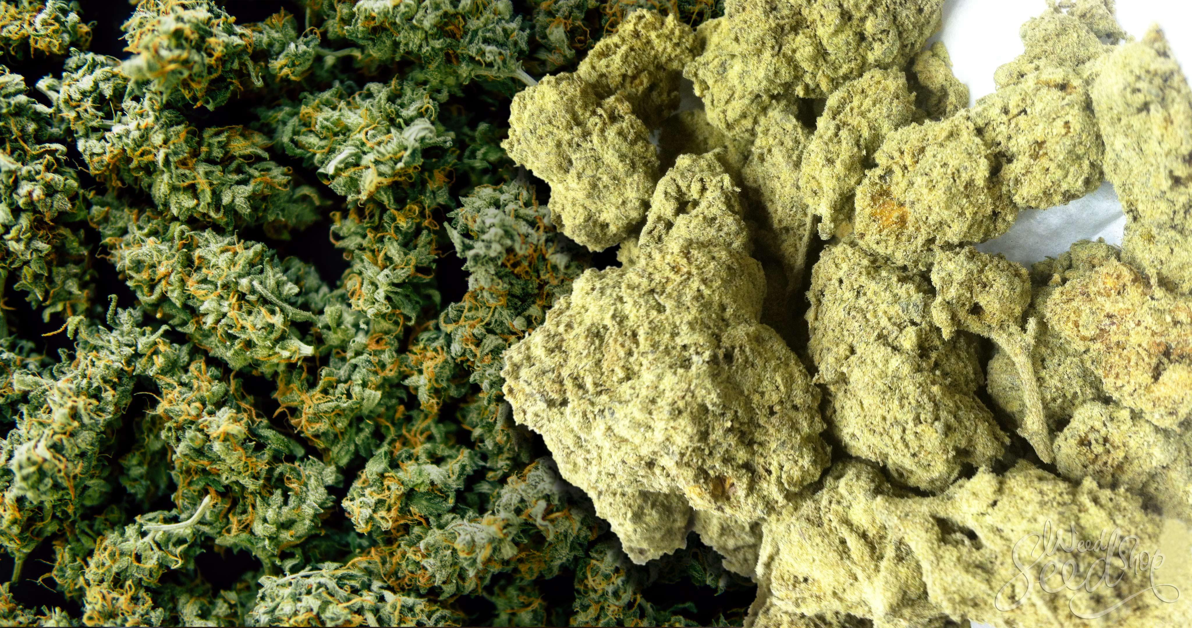 Moon Rocks: Wie du deine eigenen machst - WeedSeedShop