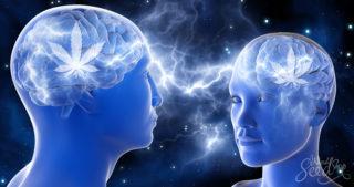 Tu Cerebro bajo los Efectos de la Marihuana