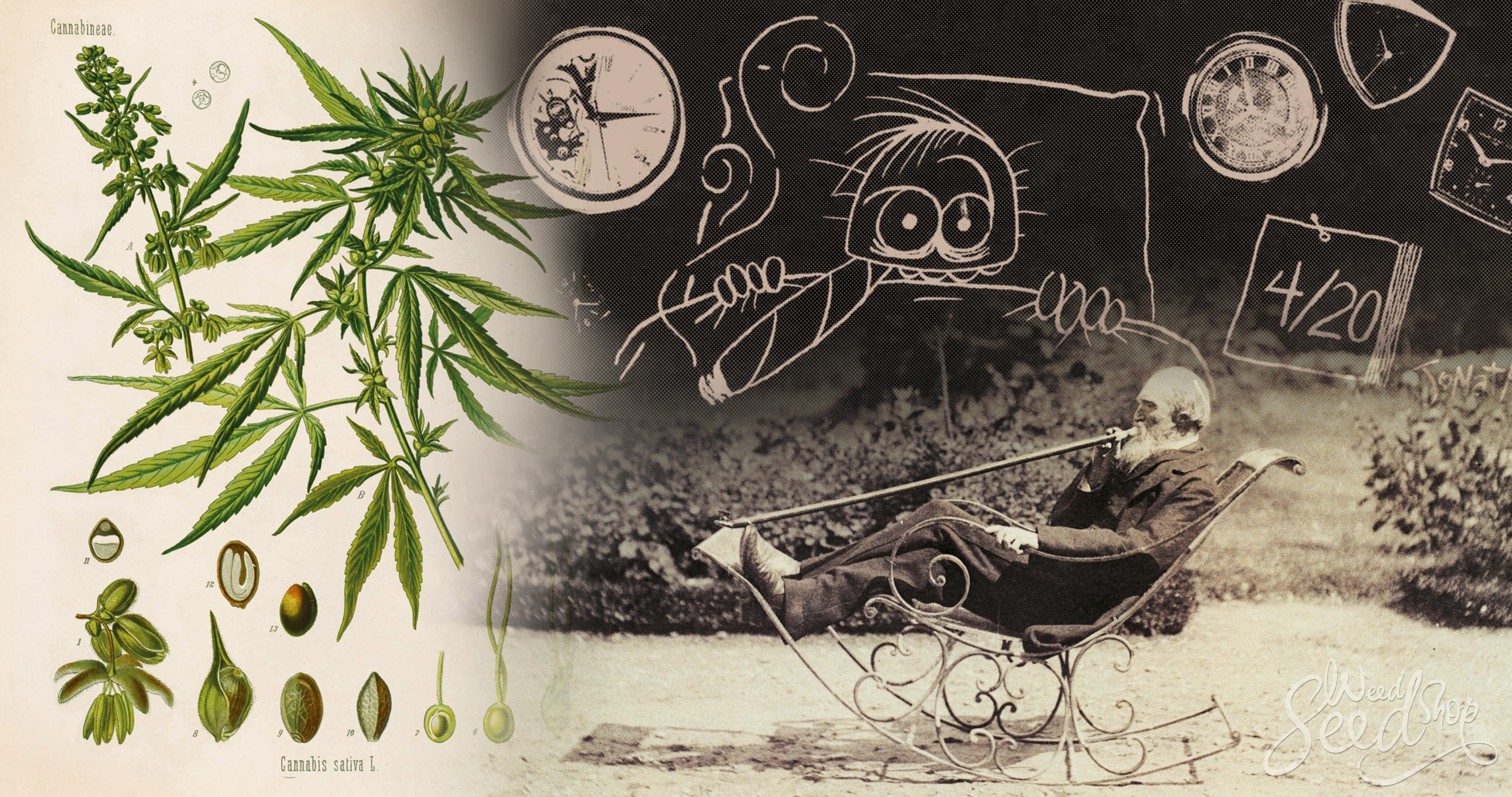 La historia del cannabis y curiosidades - WeedSeedShop
