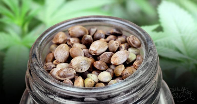 Hanfsamen aufbewahren: Wie man Samen am besten lagert