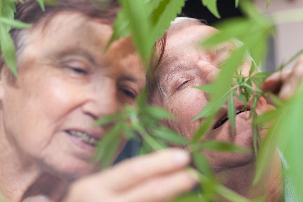 Ancianos usando cannabis: Diez buenas razones para explorar esta tendencia en crecimiento - Weed Seed Shop Blog