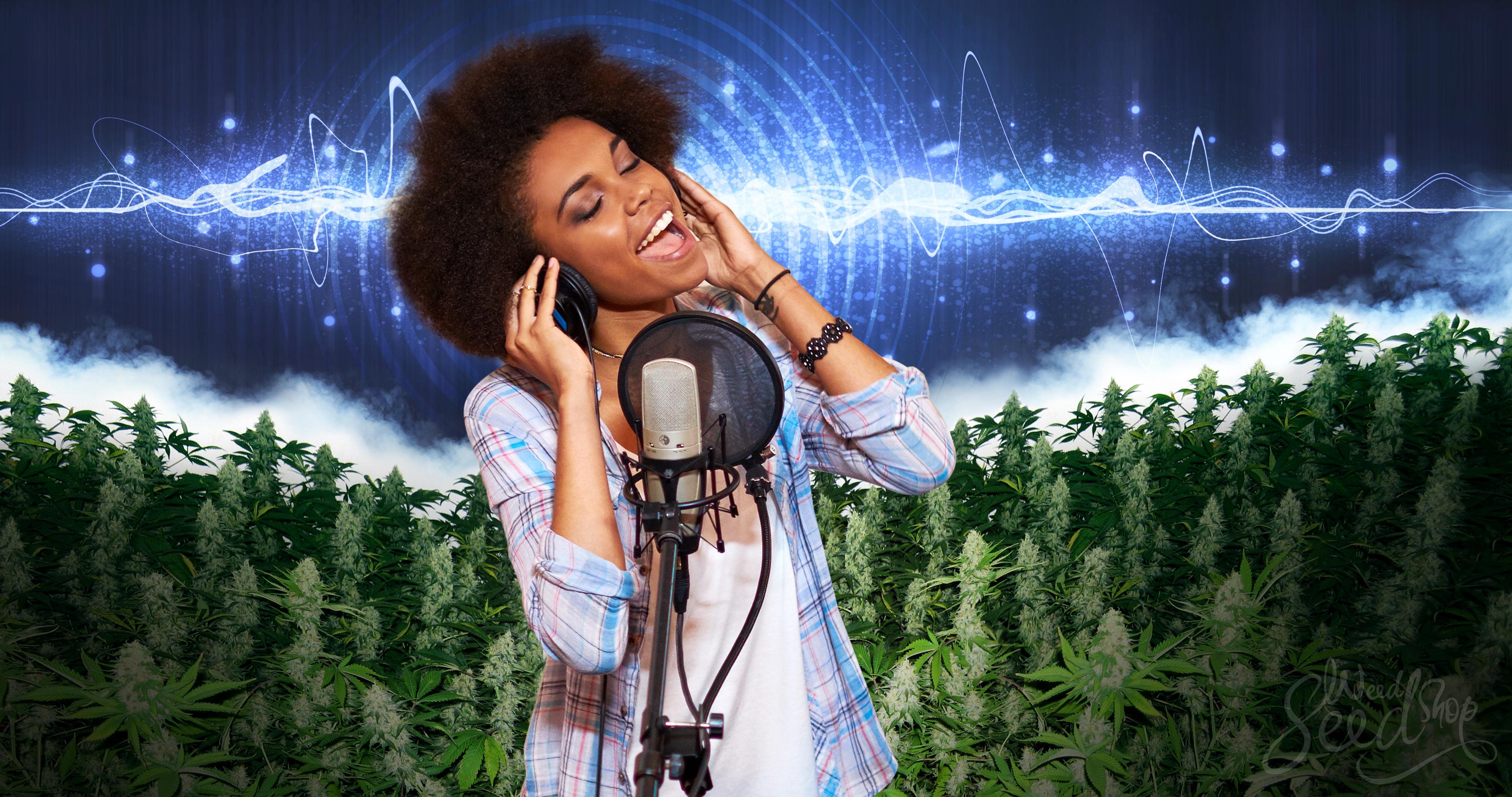 ¿Cantarle a tus plantas de marihuana las ayuda a crecer?