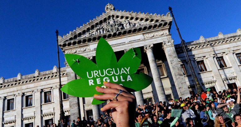 La batalla eterna: avances y retrocesos de la cruzada del cannabis