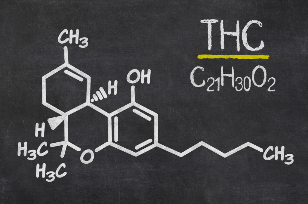 Die THC Bibel – Ein THC Crashkurs - WeedSeedShop