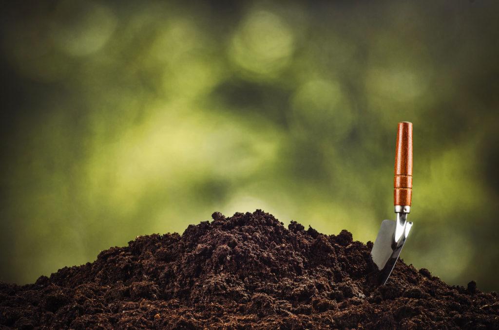 """Bodembedekkende gewassen zijn samen net als combinatie planten, methoden die al jarenlang gebruikt worden in de landbouw. Wietplanten zijn grote eters die graag veel stikstof binnenkrijgen. Naast het verstrekken van voldoende voedingsstoffen kunnen bodembedekkende gewassen ook de aarde helpen te herstellen waar je planten in groeien. Over het algemeen zijn bodembedekkende gewassen geen veeleisende planten die onder bijna elke weersomstandigheid groeien waardoor ze geschikt zijn voor elk soort kweker. Bodembedekkende gewassen worden tussen de seizoenen in gebruikt om de aarde actief en """"levend"""" te houden en om er voedingsstoffen aan te geven. Sommige bodembedekkende gewassen zijn zelfs """"fytoremediatief""""; dat betekent dat ze gifstoffen uit de aarde halen. In dit artikel gaan we het hebben over de voordelen van het gebruik van gewassen in een wietplantage en geven we een aantal aanbevelingen!  1.Voedingstoffixatie De hoofdreden dat kwekers bodembedekkende gewassen gebruiken is omdat ze voedingsstoffen kunnen fixeren in de aarde. Hoewel de lucht rijk is aan stikstof (waar wietplanten dol op zijn), is dit niet een vorm van stikstof die geabsorbeerd kan worden door planten. Hier komen de bodembedekkende gewassen van pas die magisch werken voor je wietplantage. Veel bodembedekkende gewassen, met name peulvruchten, zetten het N2 gas in onze lucht om in ammonium of nitraat; dat zijn vormen van stikstof die wiet kan eten. Peulvruchten zijn in dit geval bijzonder omdat ze de gastheren zijn van een speciaal micro-organisme dat zich in hun wortels bevindt. De rol van dit micro-organisme is om de stikstof in de atmosfeer om te zetten naar bruikbare voedingsstoffen. Het grootste deel van de tijd helpen micro-organismen en bacteriën in de aarde bij het afbreken van biologisch materiaal dat ze omzetten naar voedingsrijk eten voor planten. Maar als deze micro-organismen er niet zijn, dan zijn de planten afhankelijk van het hele trage proces van natuurlijke afbraak. En dat werkt niet """