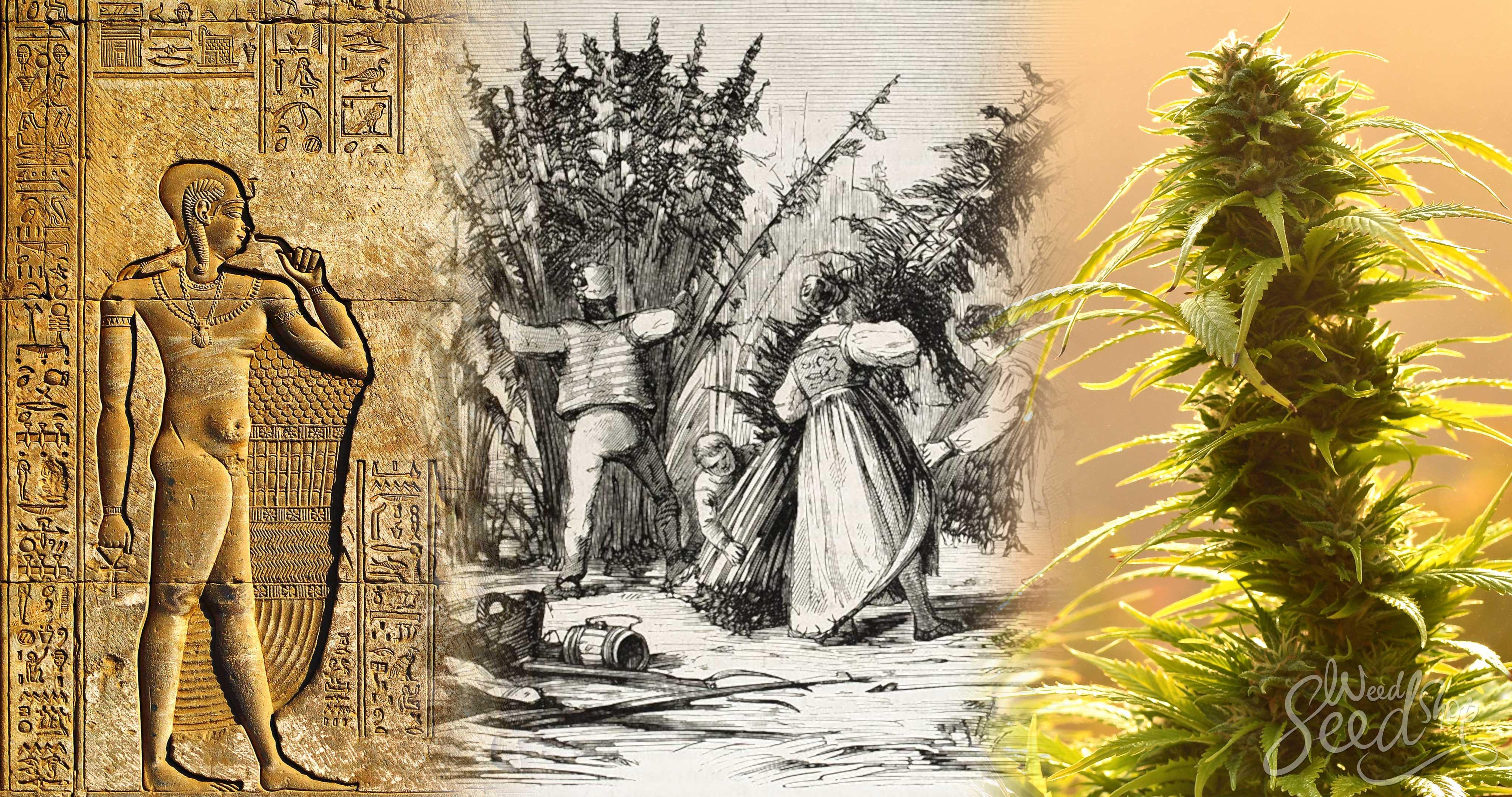 De geschiedenis van wietteelt rond de wereld - WeedSeedShop