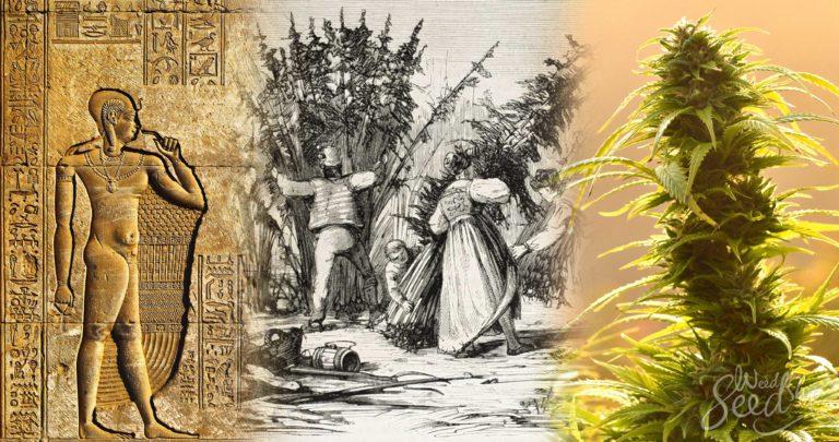 L'histoire de la culture du cannabis dans le monde