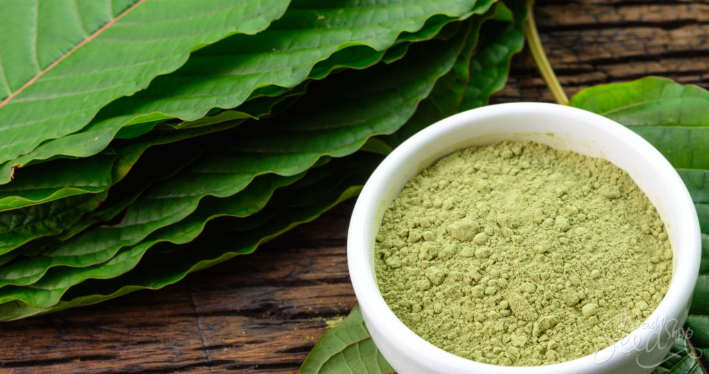 The Kratom Bible: Every Question Answered - WeedSeedShop