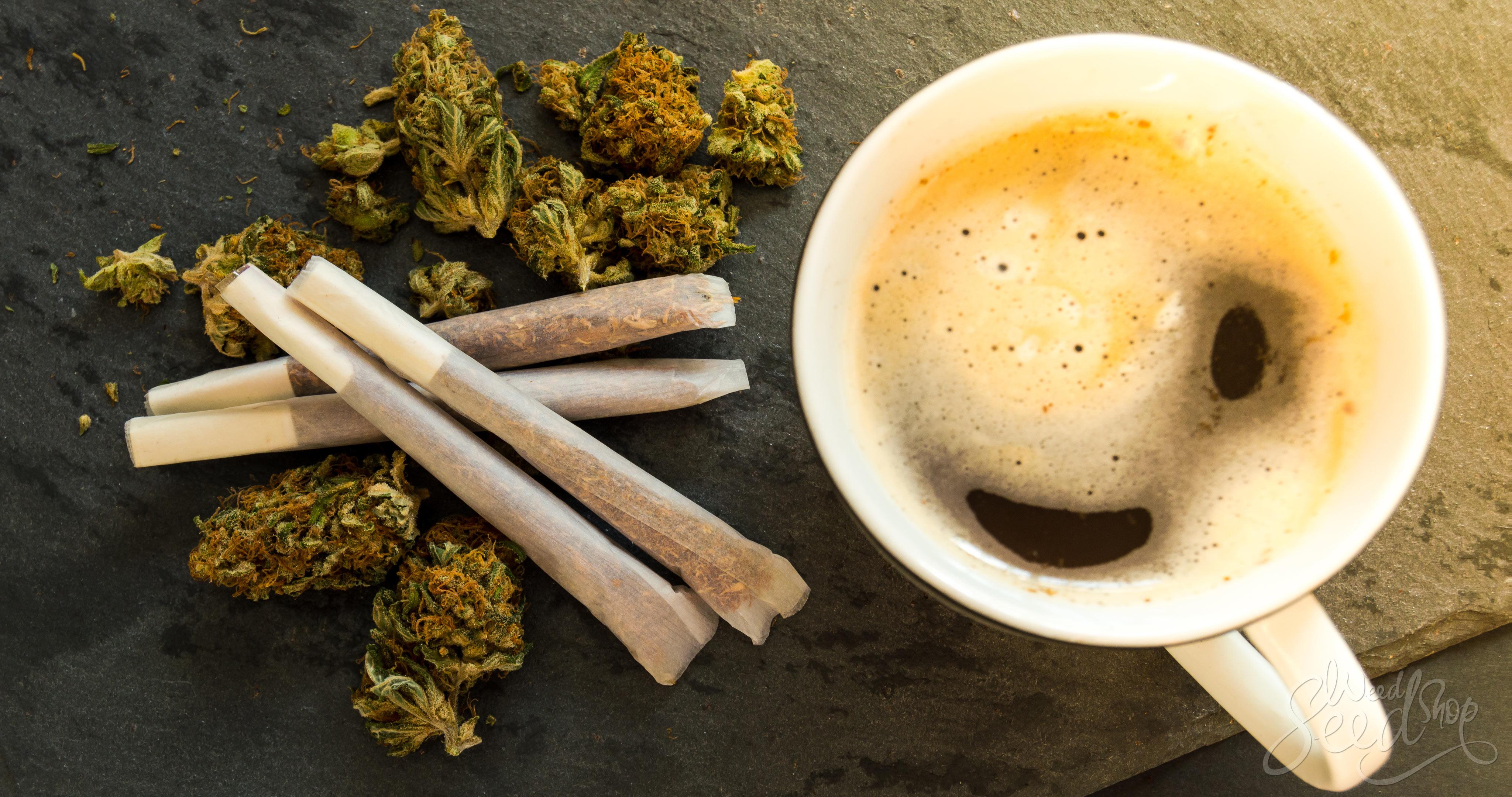 Los pros y contras de despertarse y fumar - WeedSeedShop