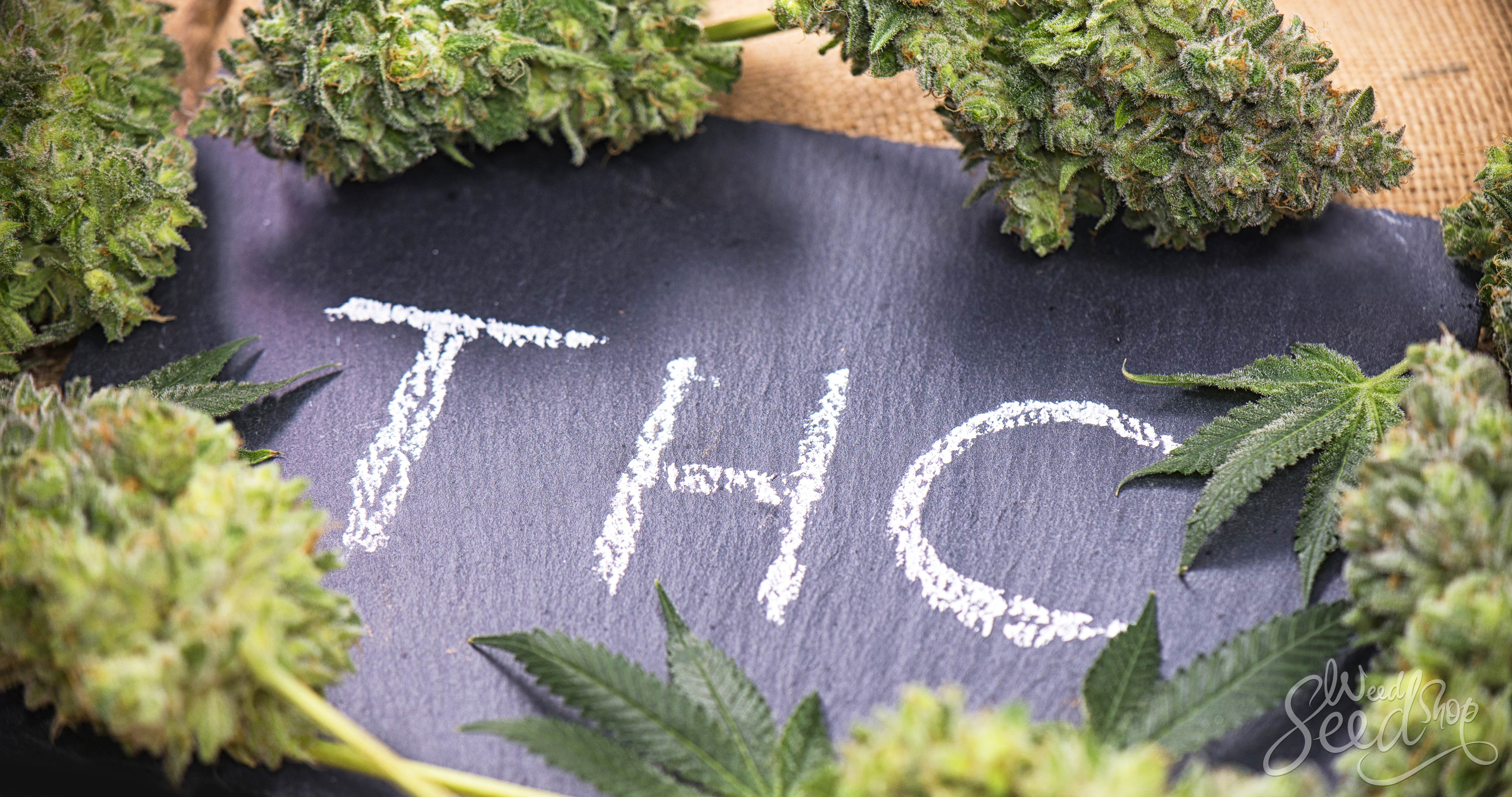 The THC Bible – A Crash Course on THC - WeedSeedShop