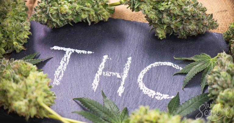 De THC Bijbel – Een Snelcursus in THC