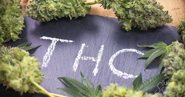The THC Bible – A Crash Course on THC