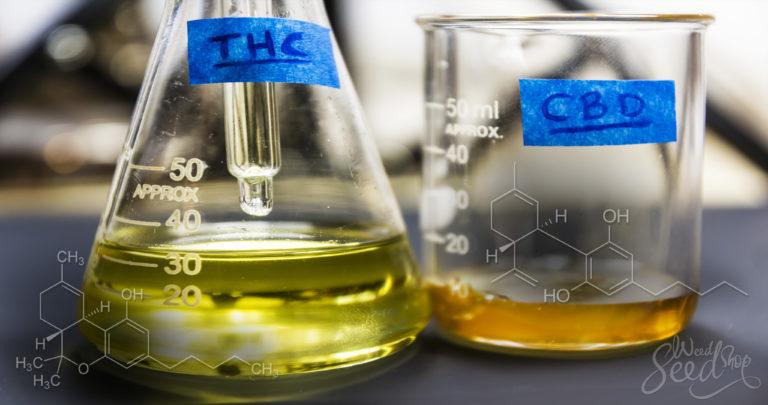 Op Zoek Naar De Verschillen Tussen THC en CBD