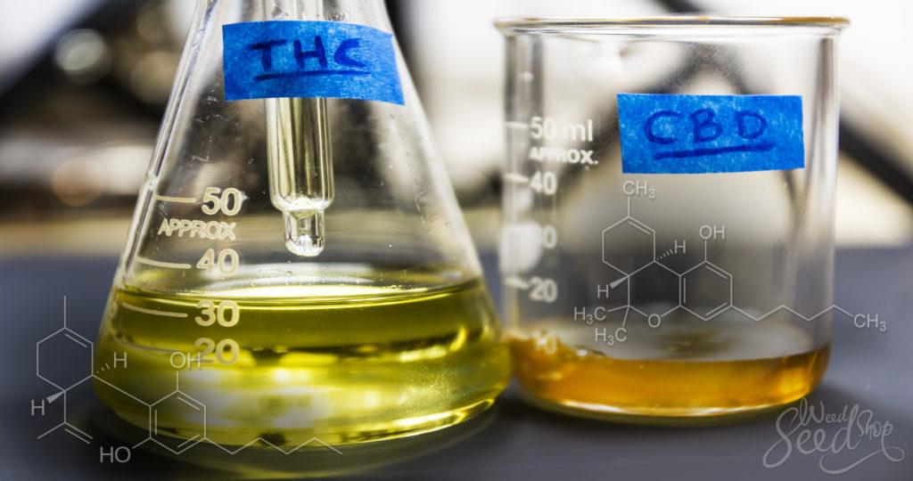 Las diferencias entre el THC y el CBD - WeedSeedShop