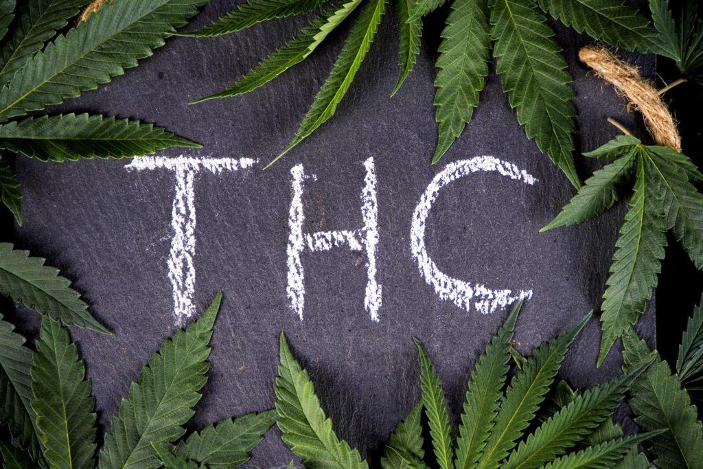 El sistema endocannabinoide para principiantes – WeedSeedShop