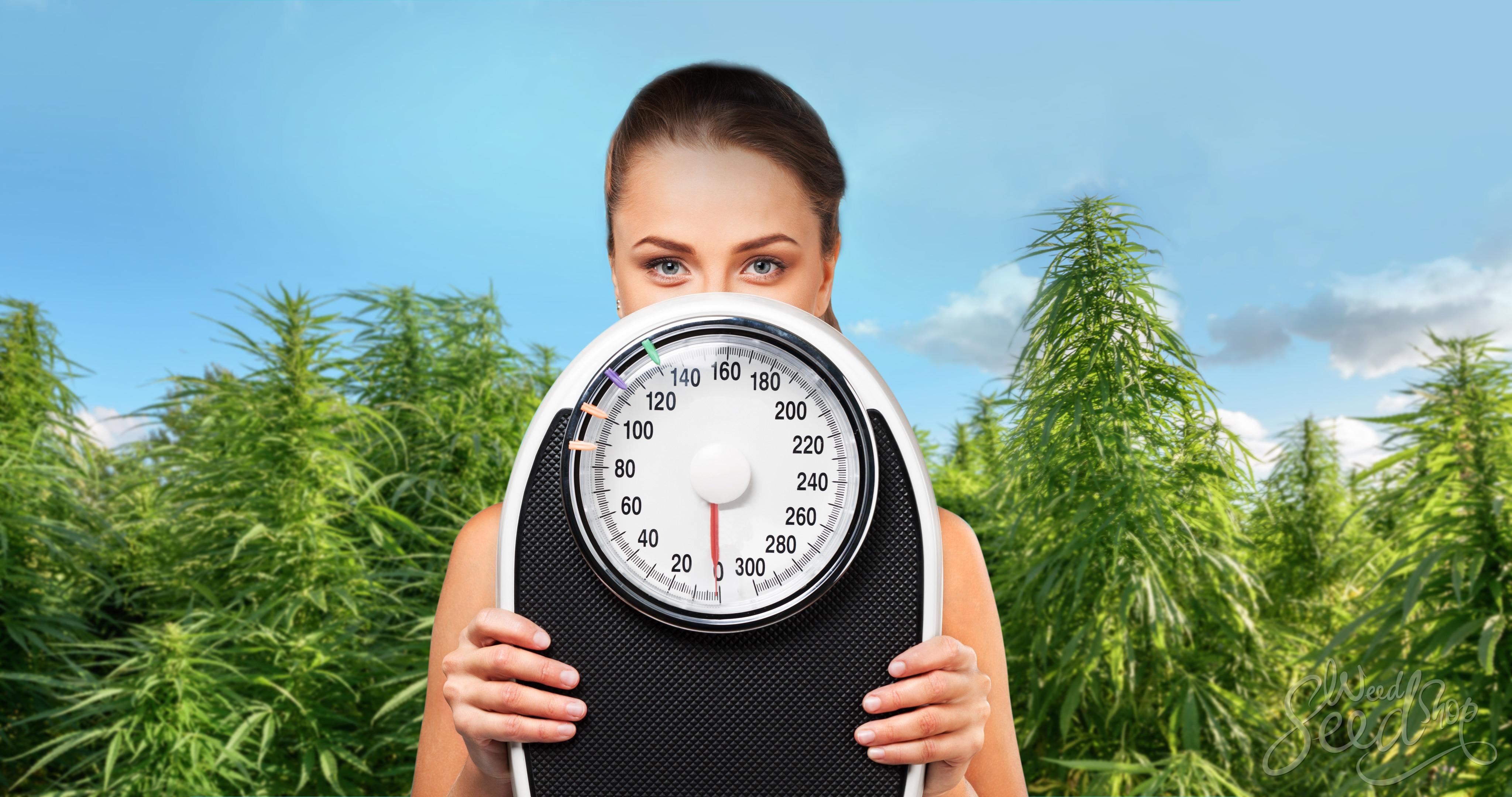 Marijuana – El ayudante feliz para la pérdida de peso