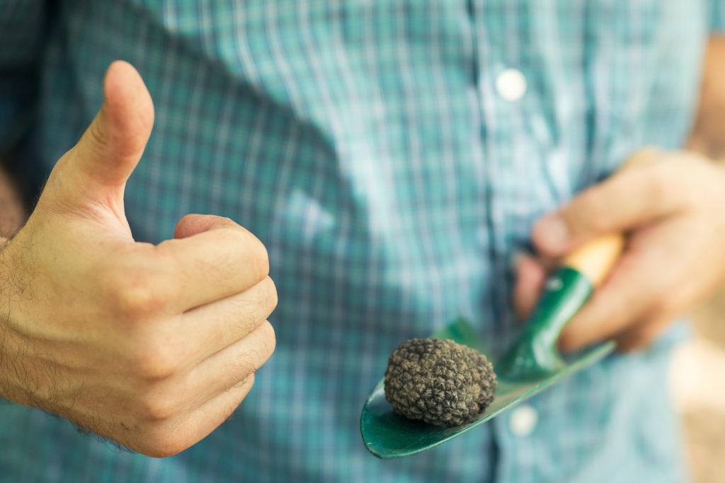 9 plantes qui contiennent des cannabinoïdes- WeedSeedShop