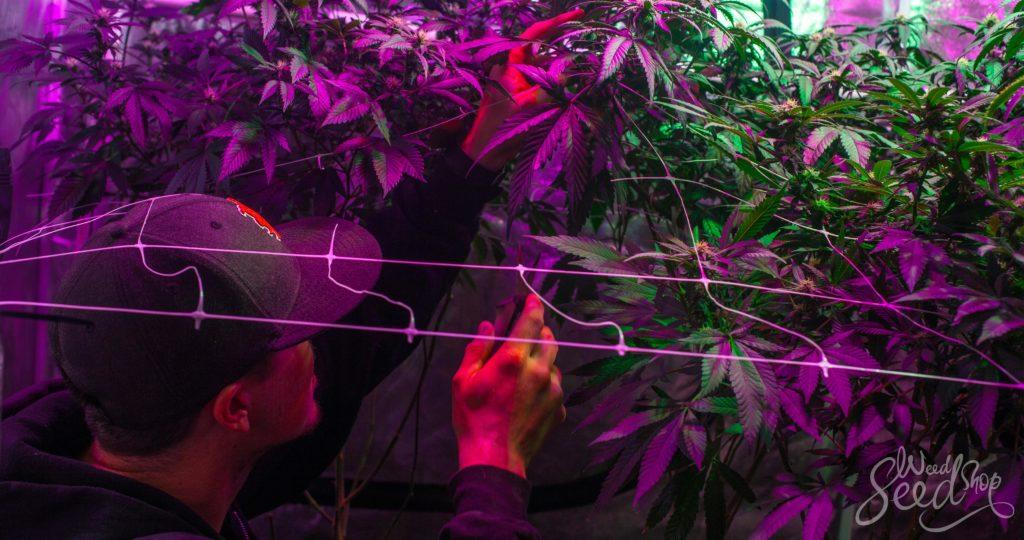 Consejos sobre cómo mantener tu espacio de cultivo tan discreto como sea posible – WeedSeedShop Blog