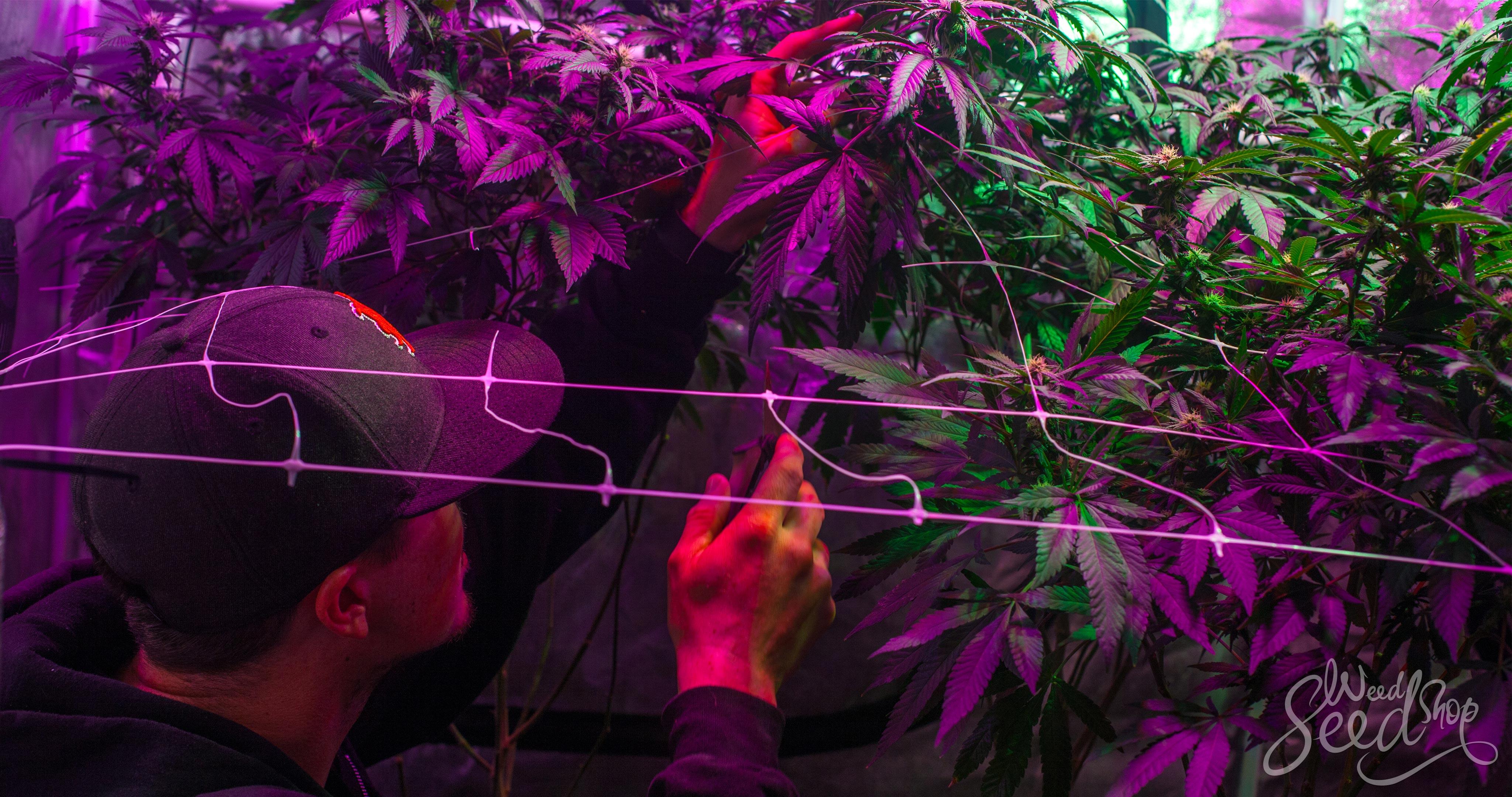Tipps für einen diskreten Anbau - WeedSeedShop Blog