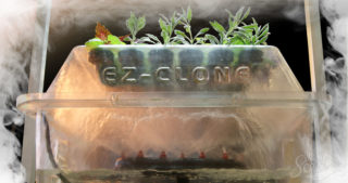 How to Grow Cannabis with an Aeroponics System