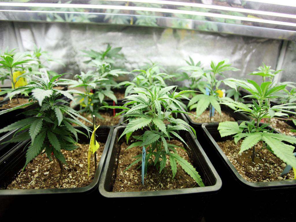 Was man über die Fortpflanzung und Vererbung von Pflanzen wissen sollte