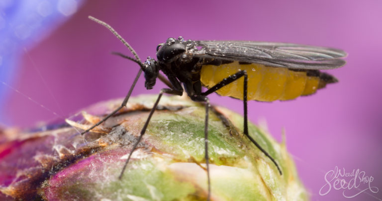 What Are Fungus Gnats & How To Kill Them?