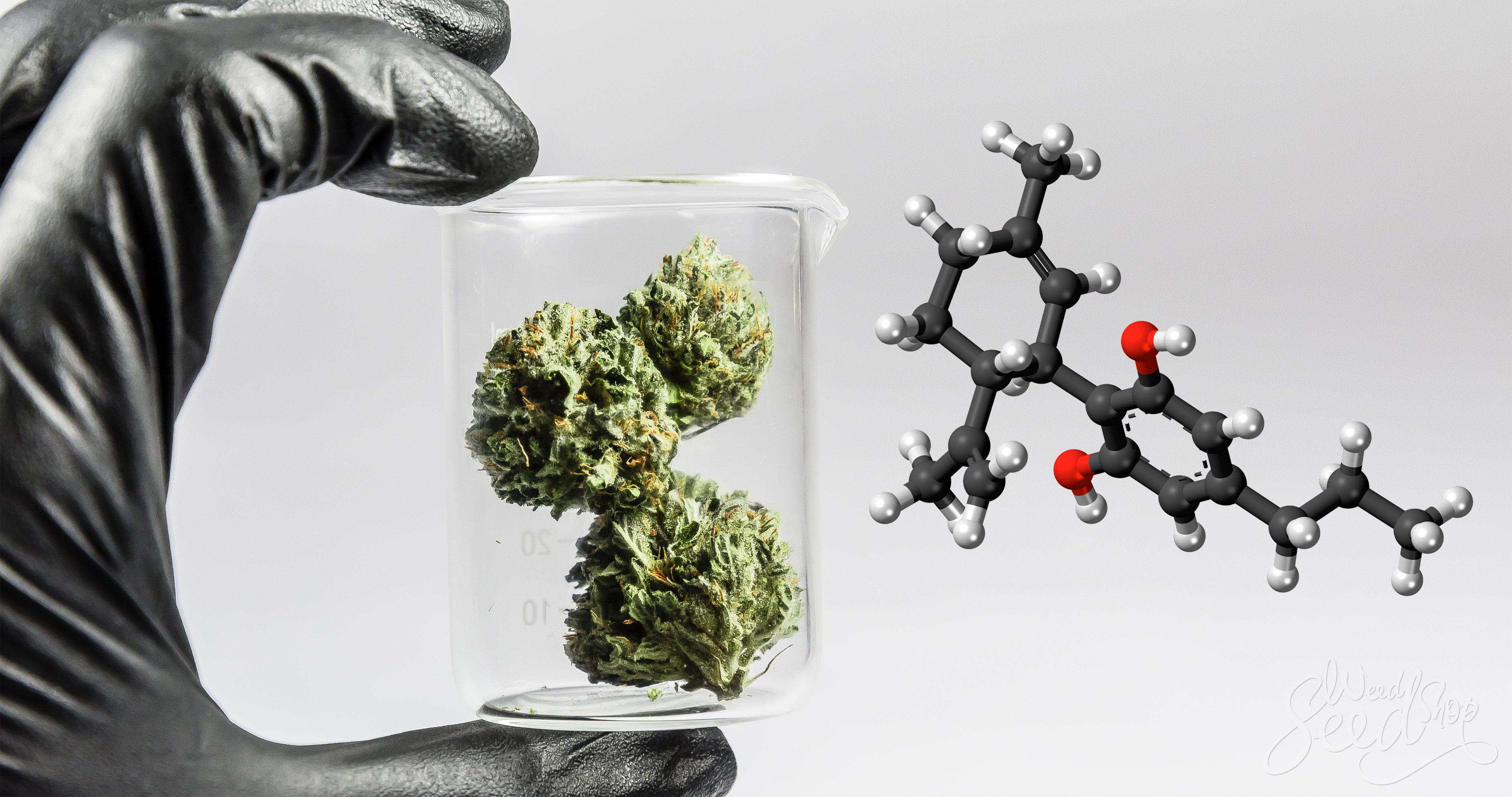 Cannabis Anatomie 1x1 – Weed Seed Shop Blog