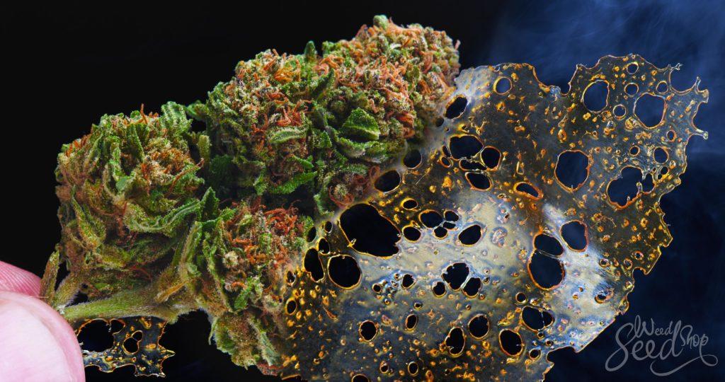 Was ist BHO und ist es sicher? - Weed Seed Shop Blog