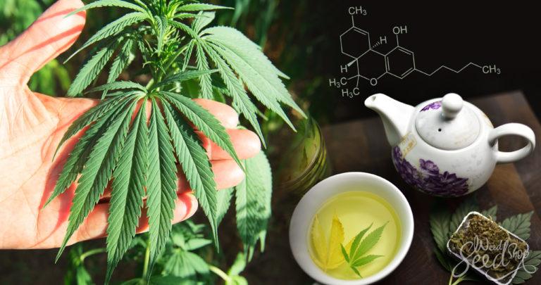 Que faire avec les feuilles de cannabis ?