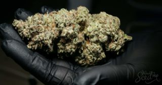 Which cannabis strains produce the biggest buds?‏