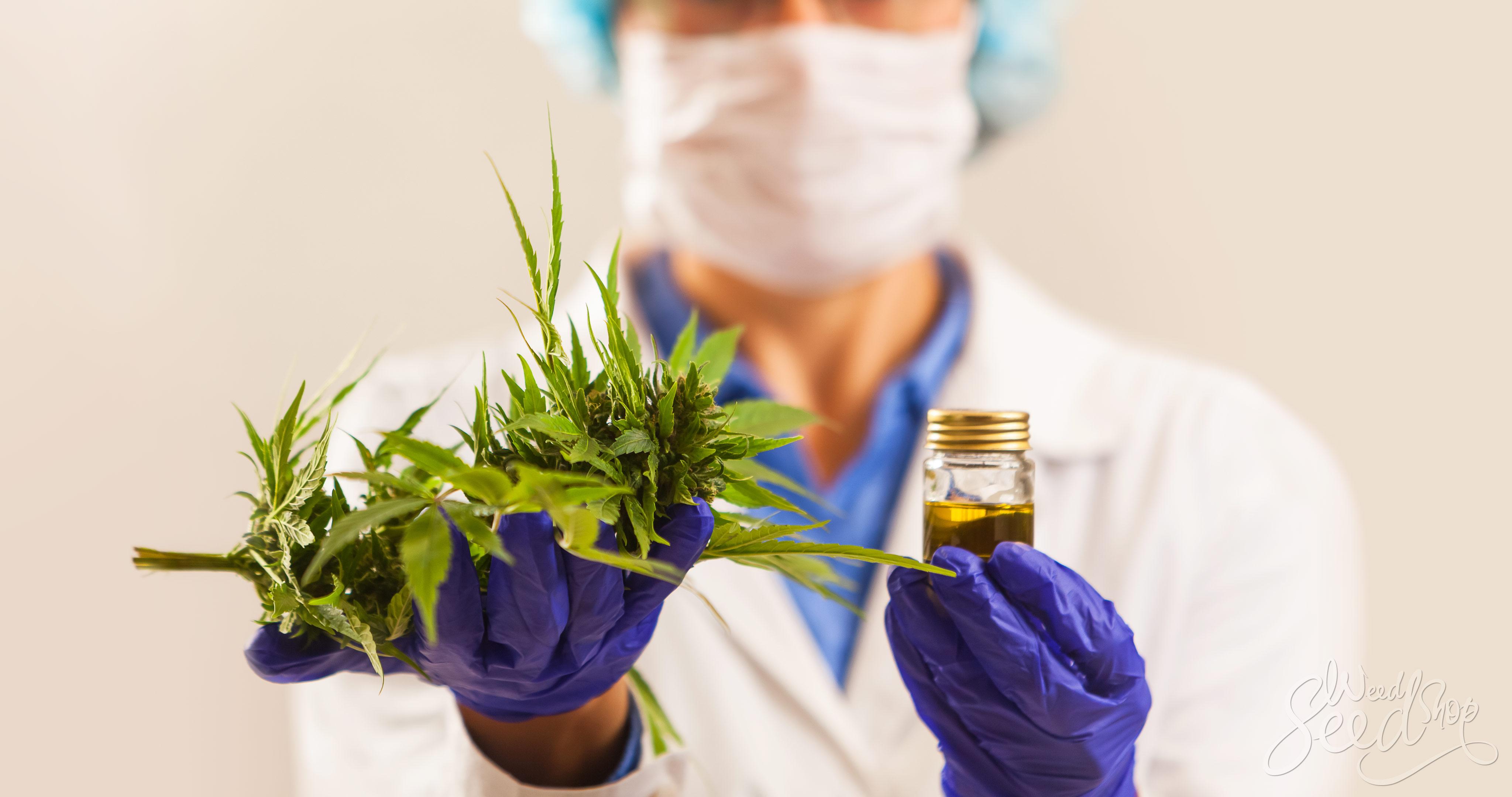 La medicina natural y el efecto entourage - WeedSeedShop