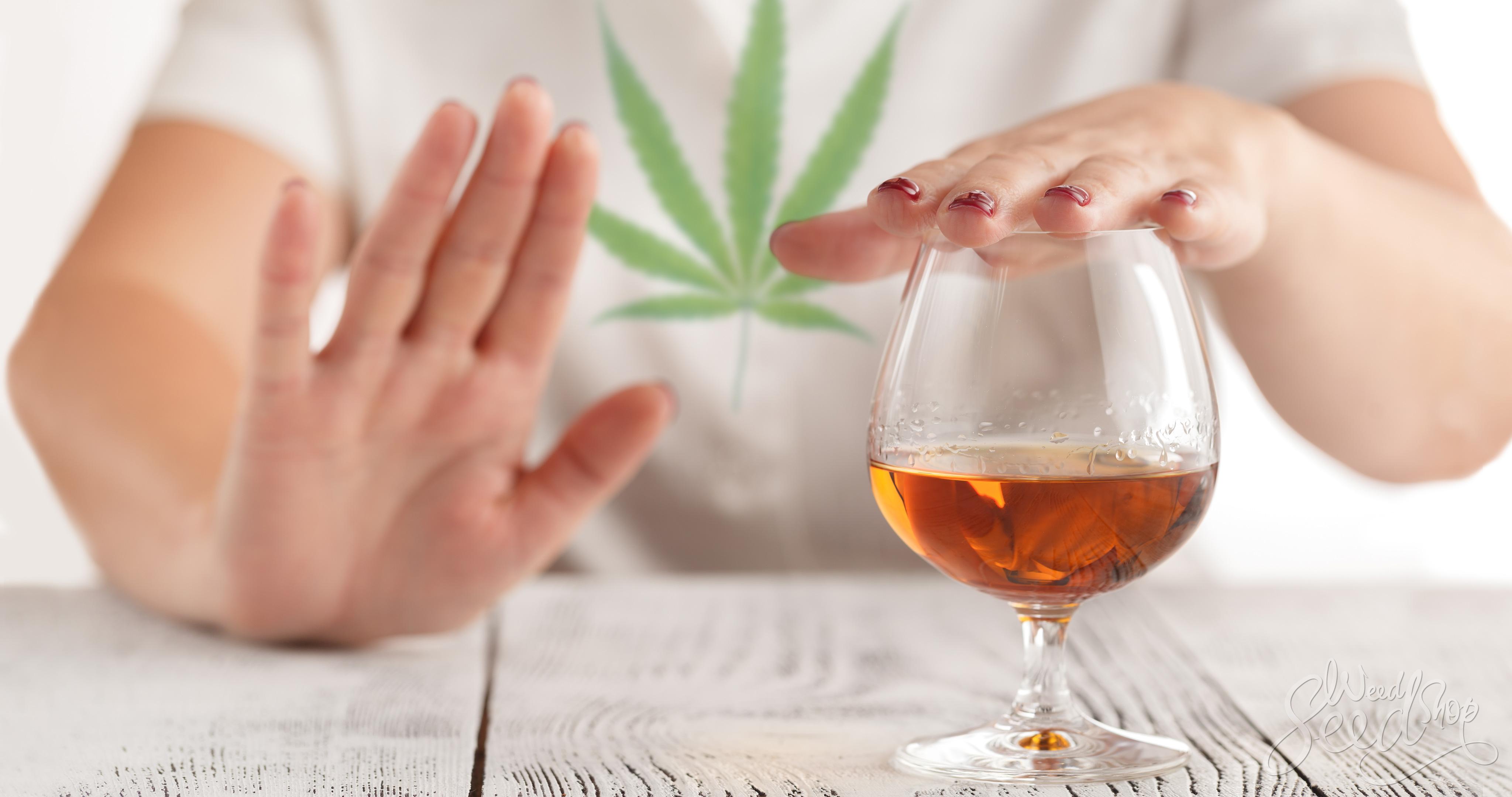 ¿El cannabis medicinal trata el alcoholismo? - WeedSeedShop