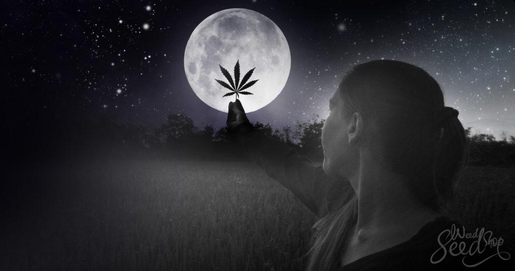 Menstruatiemarihuana: Mijn bezoek aan een wiet-heks