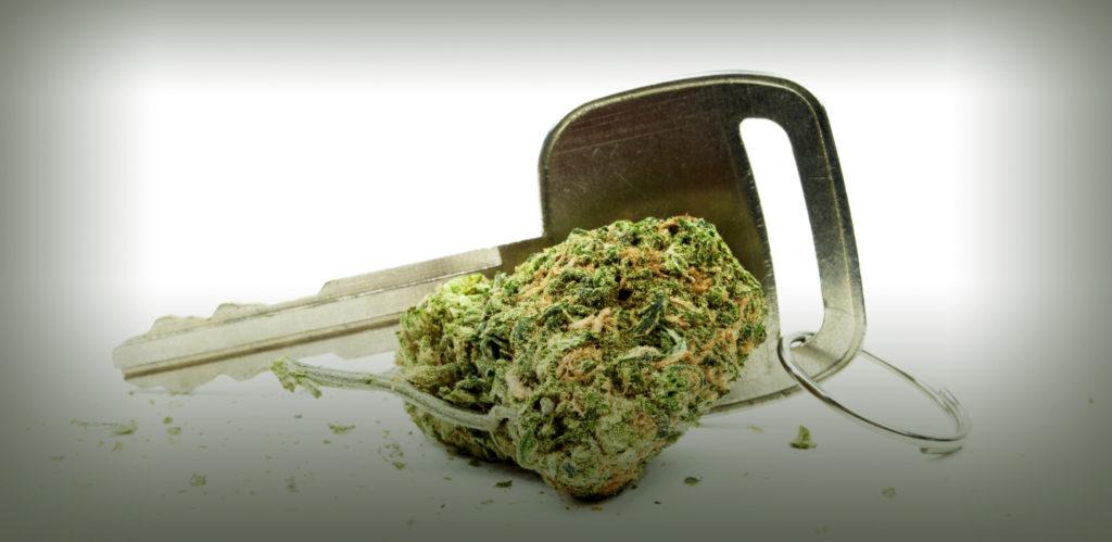 Le cannabis fait-il de toi un mauvais conducteur ? - WeedSeedShop Blog