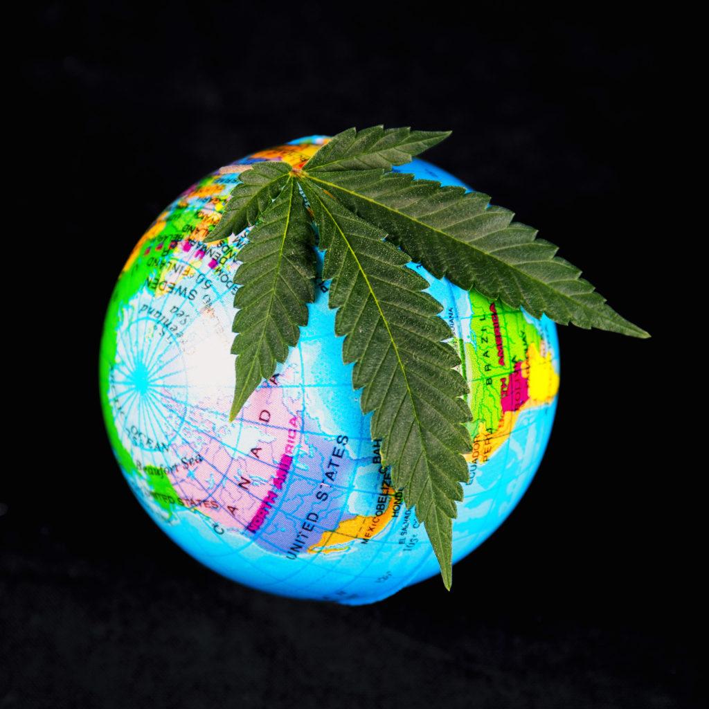 Cannabis récréatif et cannabis médical – quelle est la différence ? - WeedSeedShop Blog