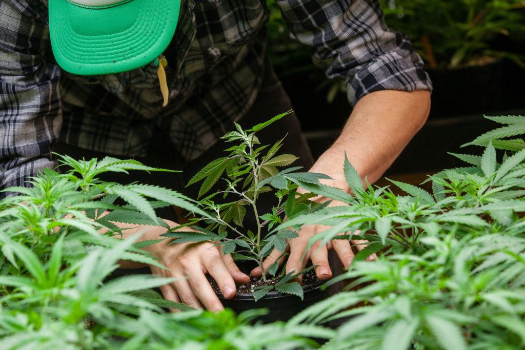 Los 8 mejores empleos sobre el cannabis - WeedSeedShop