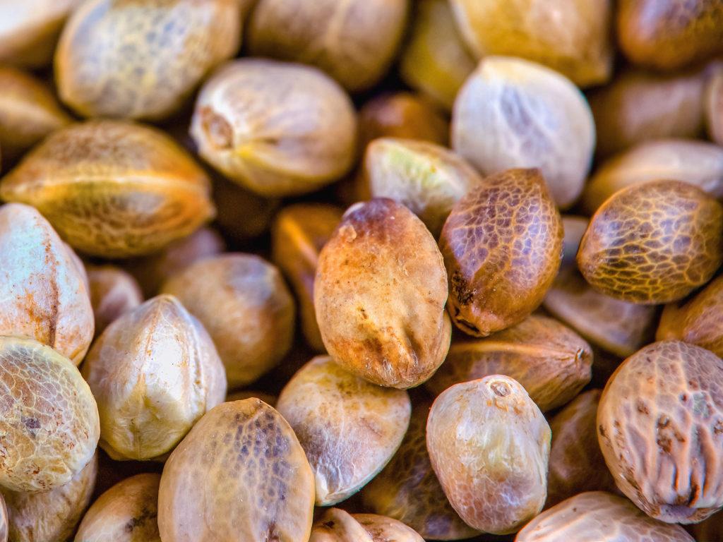 Wat Is De Beste Periode Om Wiet te Kweken? - Weed Seed Shop Blog