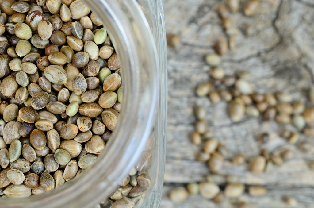 Seed Storage 101: How to Store Cannabis Seeds - Weed Seed Shop Blog