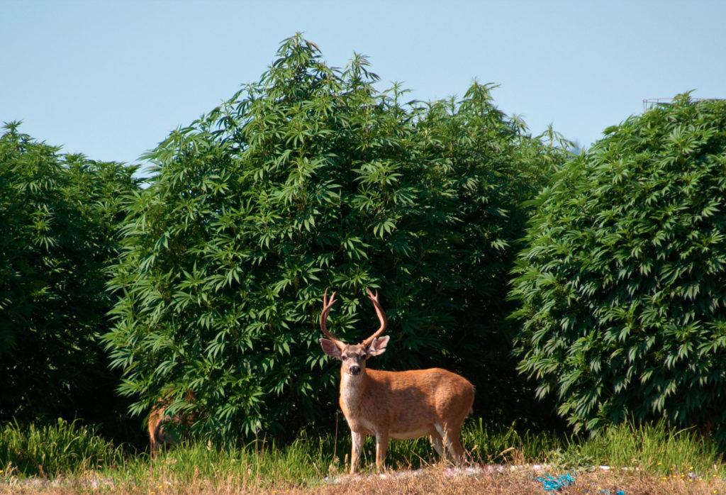 Éviter les pesticides : quelles alternatives ? - Weed Seed Shop Blog