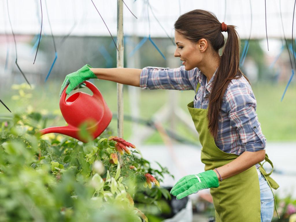 Wie man Komposttee für Cannabis herstellt - Weed Seed Shop